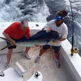 Deep sea fishing for dorado